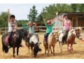 Poney club, écurie Jul'Hyppos (49 nord Angers)