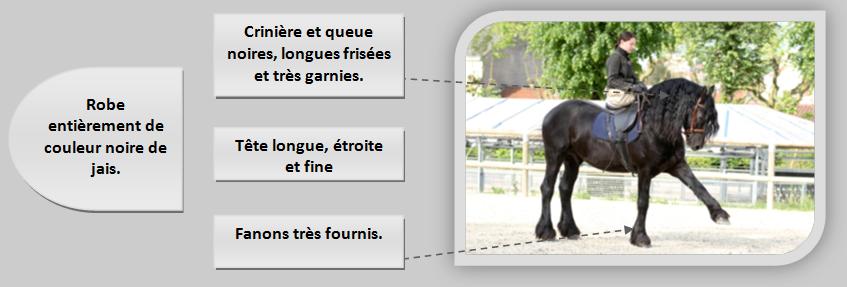 modèle du cheval Frison