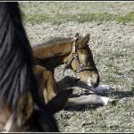 Noms en B chevaux