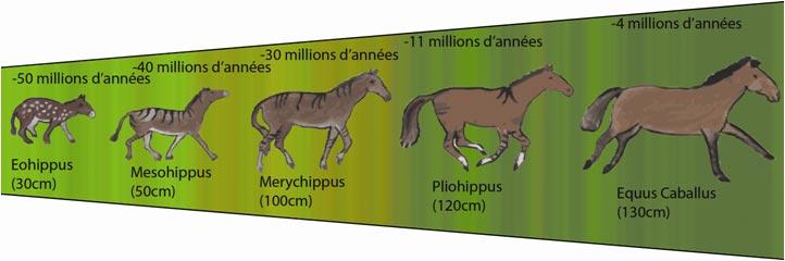 histoire - les ancêtres des chevaux