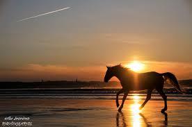 chevaux craignent le soleil